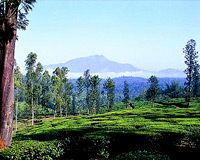 Hill Station, Wayanad